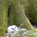 Nature Tree Roots 027