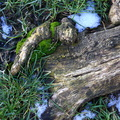 Nature Tree Roots 011