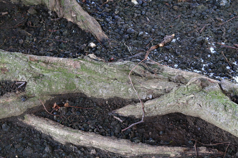 Nature_Tree_Roots_016.jpg