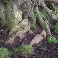 Nature Tree Roots 019