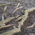 Nature Tree Roots 022