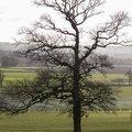 Nature Trees 038