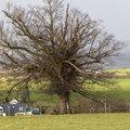 Nature Trees 028