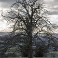 Nature Trees 033