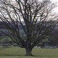 Nature Trees 034