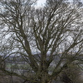 Nature Trees 035