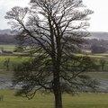 Nature Trees 036