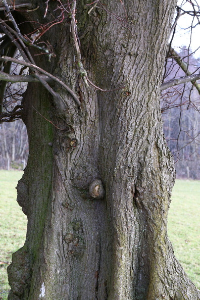 Nature_Tree_Trunk_225.JPG