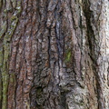 Nature Tree Trunk 226