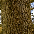 Nature Tree Trunk 229
