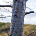 Nature Tree Trunk 119
