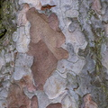 Nature Tree Trunk 123