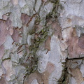 Nature Tree Trunk 124