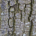 Nature Tree Trunk 127