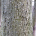 Nature Tree Trunk 128