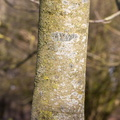 Nature Tree Trunk 129