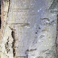 Nature Tree Trunk 130