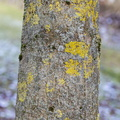 Nature Tree Trunk 131