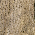 Nature Tree Trunk 133