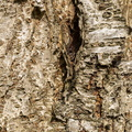 Nature Tree Trunk 136