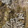 Nature Tree Trunk 137