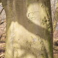 Nature Tree Trunk 140