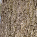 Nature Tree Trunk 145