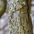 Nature Tree Trunk 146
