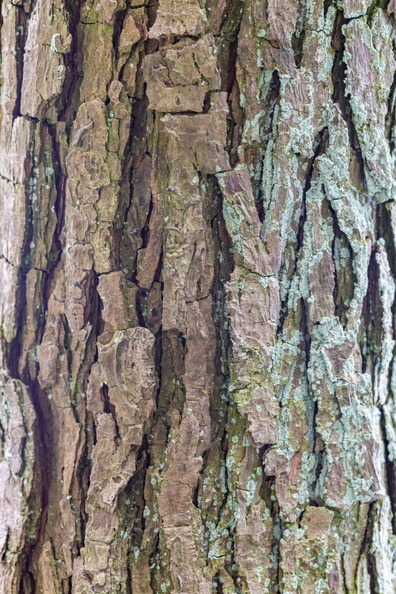 Nature_Tree_Trunk_147.JPG