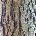 Nature Tree Trunk 147