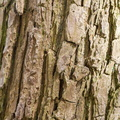 Nature Tree Trunk 149