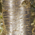 Nature Tree Trunk 152