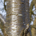 Nature Tree Trunk 154