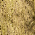 Nature Tree Trunk 155