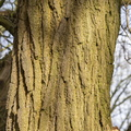 Nature Tree Trunk 156