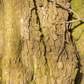 Nature Tree Trunk 157