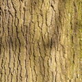 Nature Tree Trunk 159