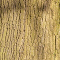 Nature Tree Trunk 160