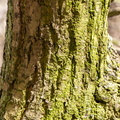Nature Tree Trunk 161