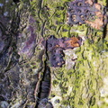 Nature Tree Trunk 162