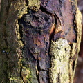 Nature Tree Trunk 164