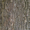 Nature Tree Trunk 166