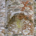 Nature Tree Trunk 167