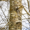 Nature Tree Trunk 168