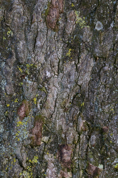 Nature_Tree_Trunk_169.JPG