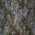 Nature Tree Trunk 169
