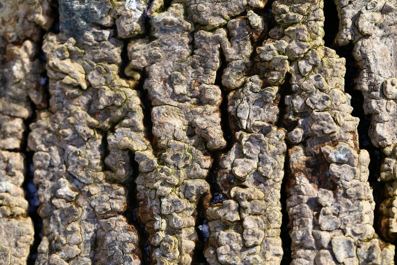 Nature_Tree_Trunk_172.JPG