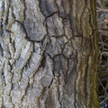 Nature Tree Trunk 173