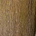 Nature Tree Trunk 175