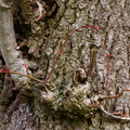 Nature Tree Trunk 177